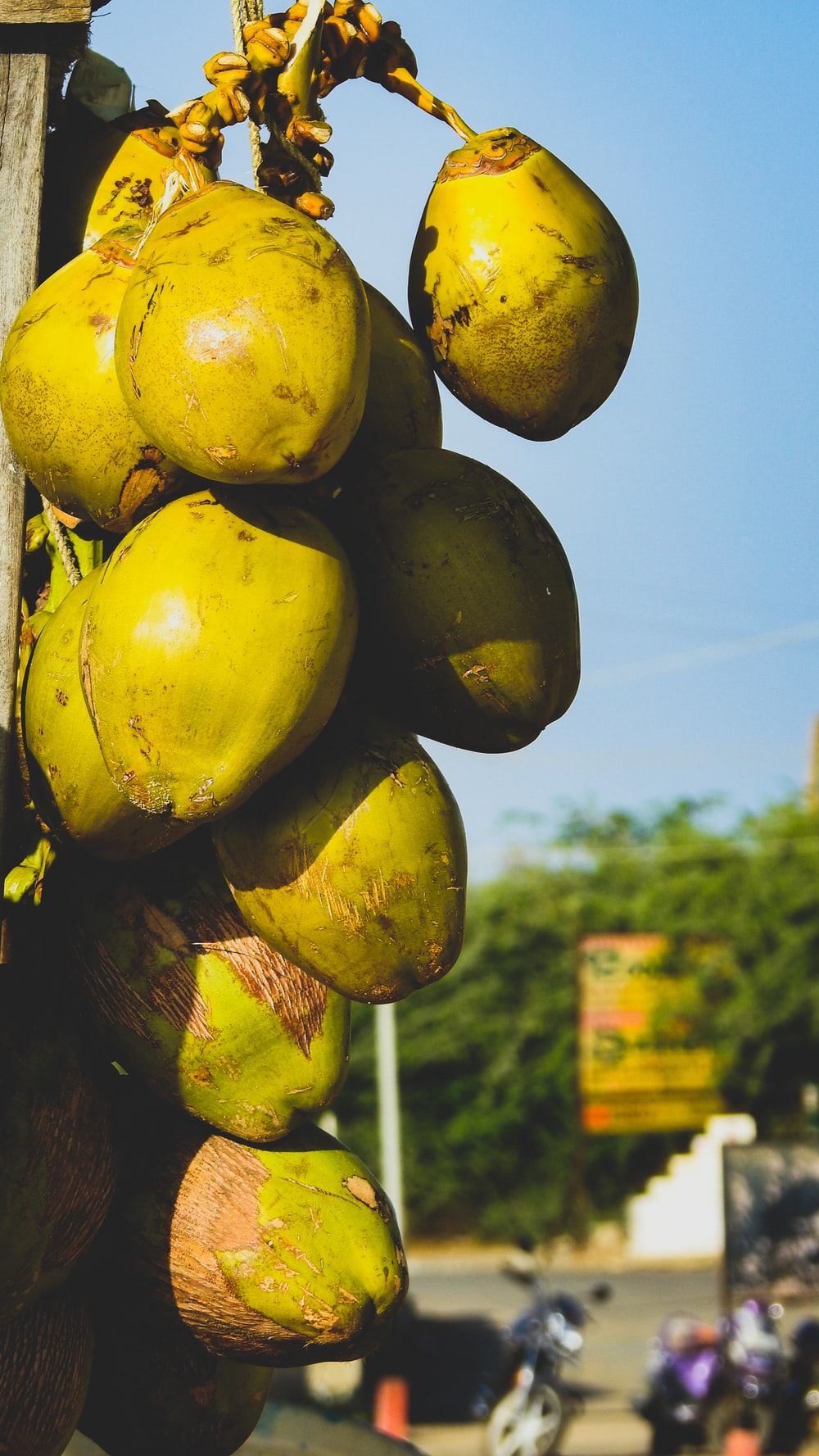 yellow and green fruit during daytime