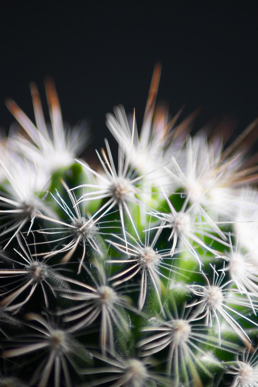 green and white dandelion flower