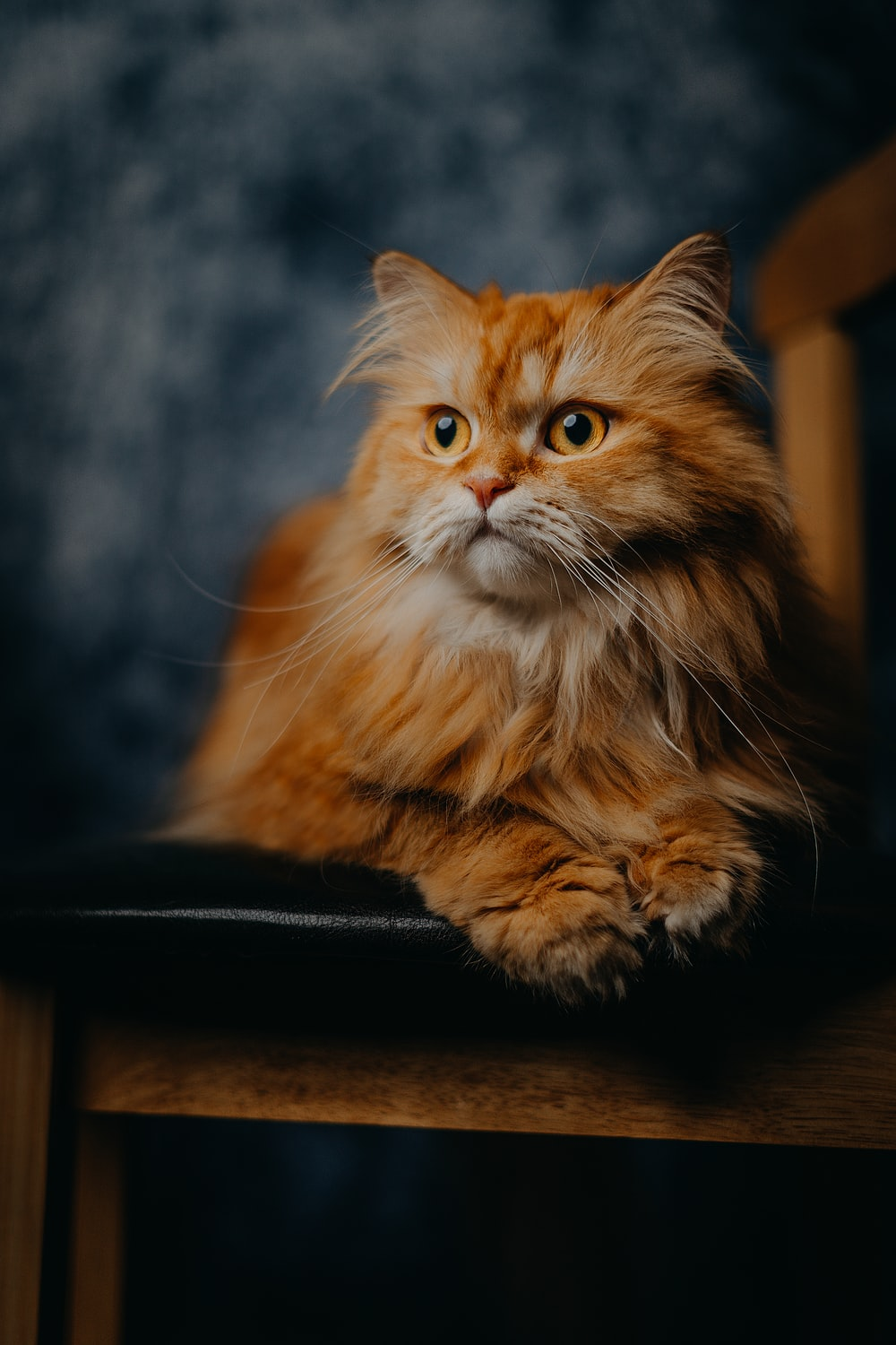 brown tabby cat on black leather chair
