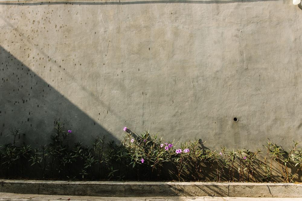 purple flower beside gray concrete wall