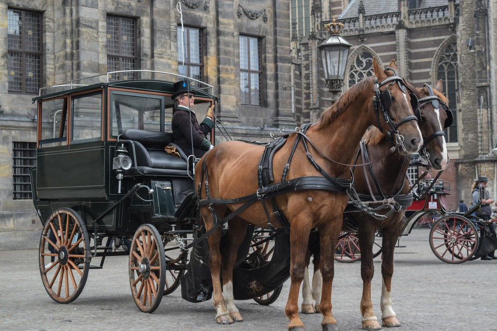 brown horse with black carriage on street during daytime