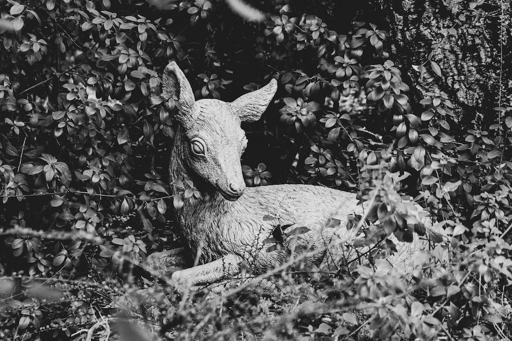 gray scale photo of deer