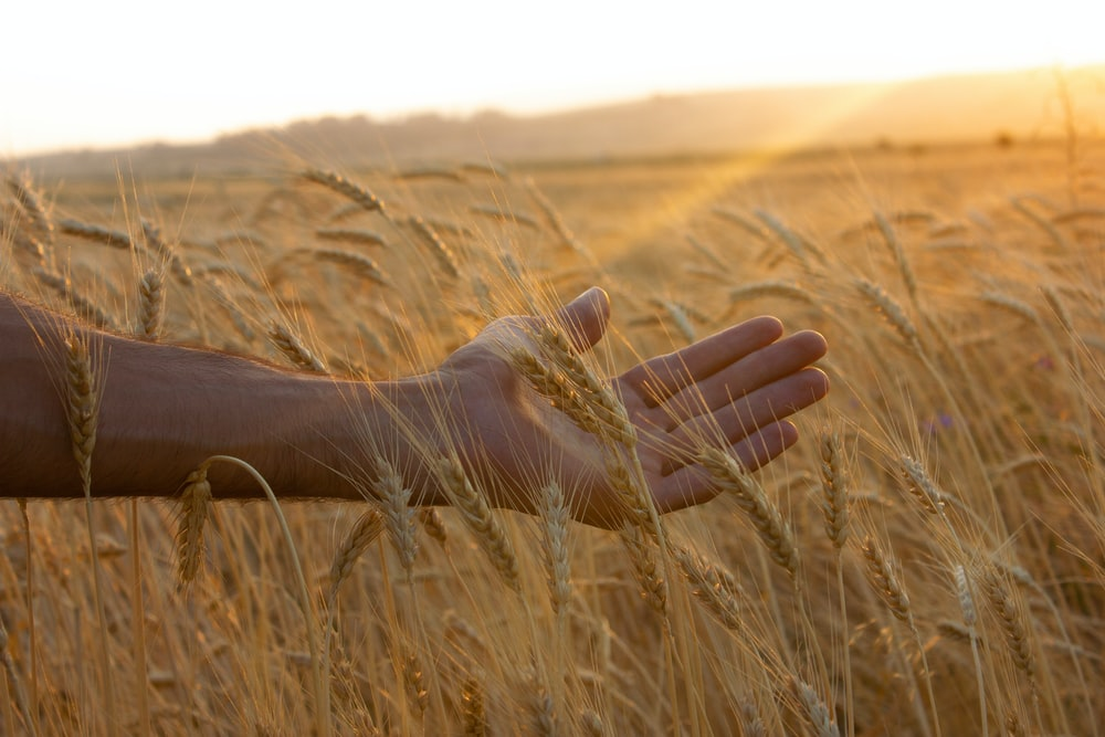 persons hand on brown grass field during daytime
