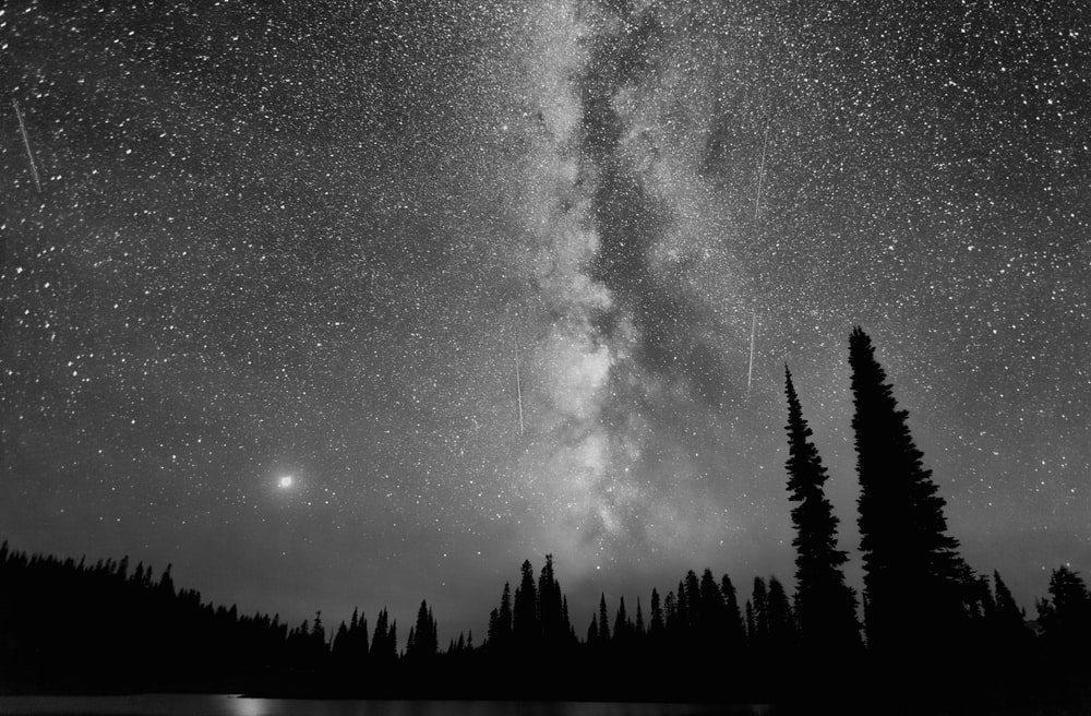silhouette of trees under starry night