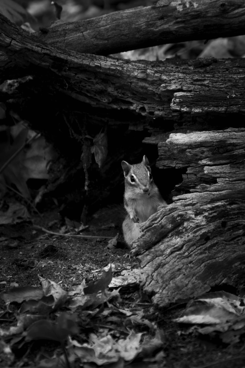 grayscale photo of cat on rock
