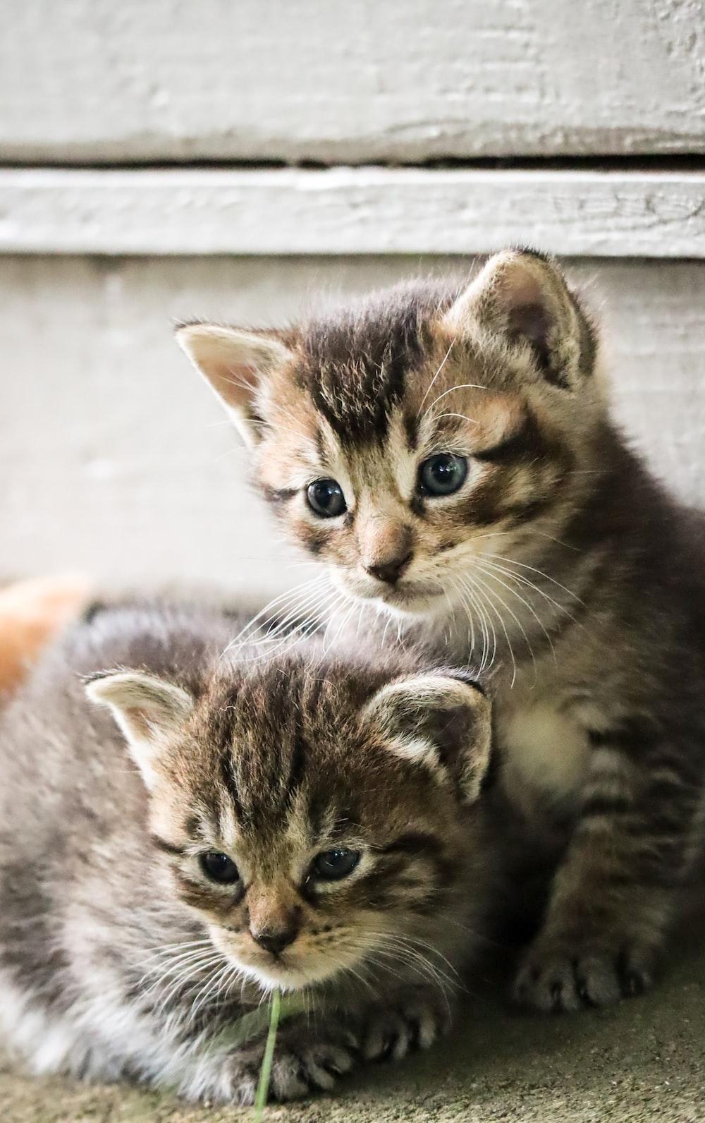 brown tabby kitten on gray concrete floor