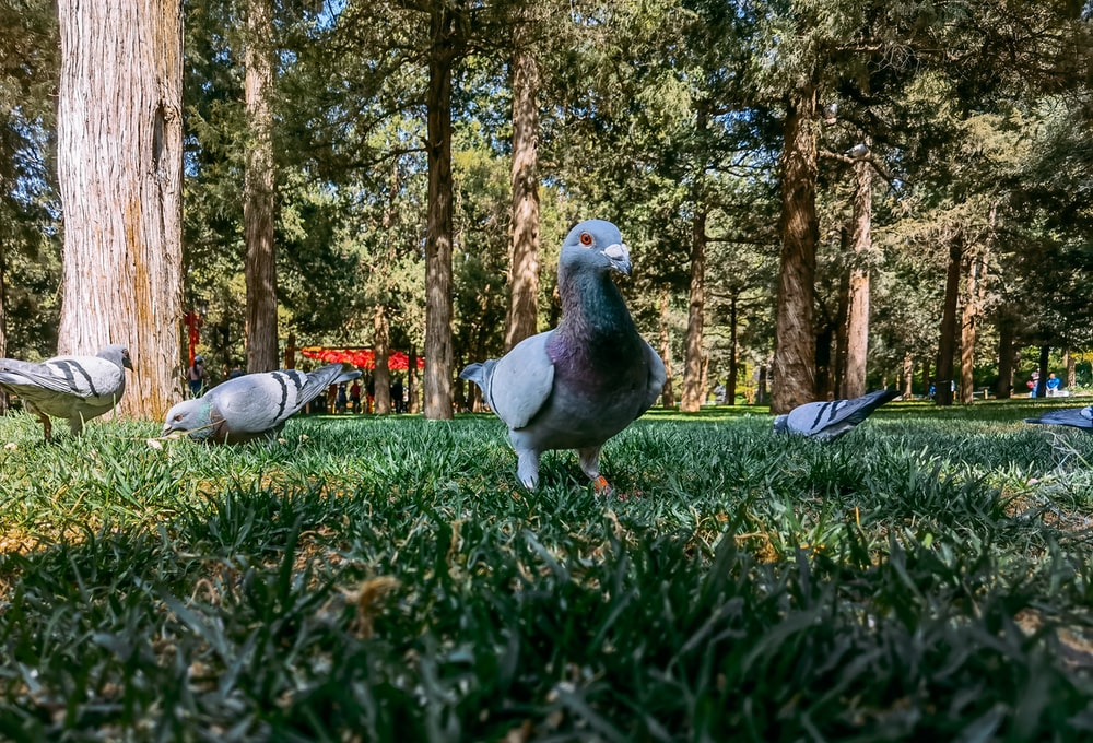 white and gray bird on green grass during daytime