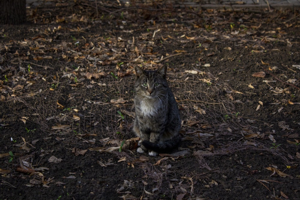 brown tabby cat sitting on ground