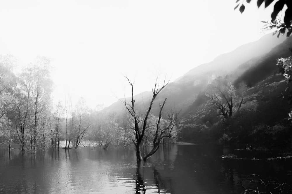 grayscale photo of bare tree on lake