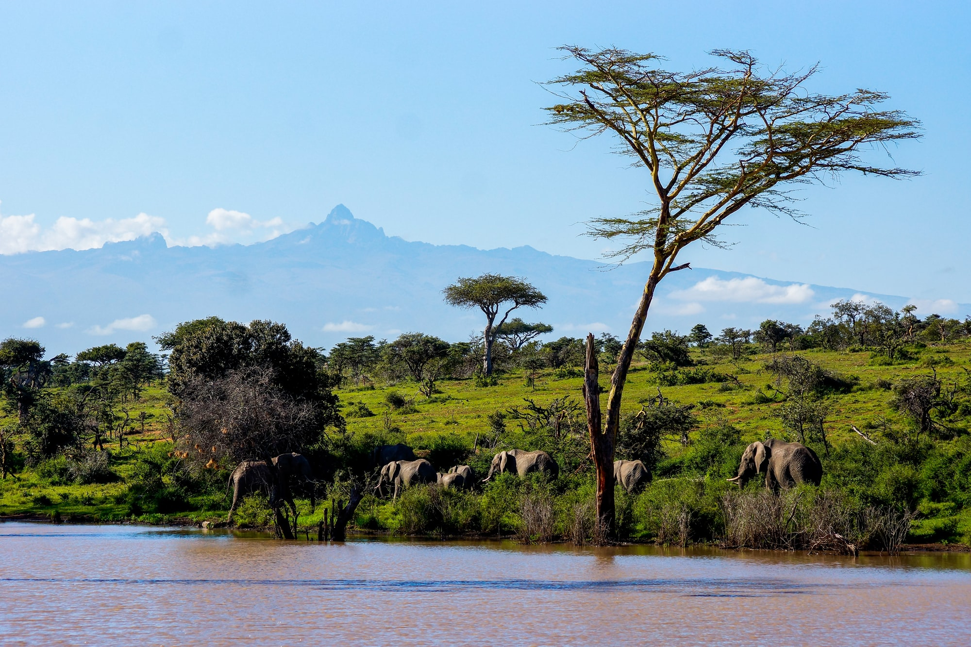 A herd of Elephants coming to drink. In the background is the mighty Mount Kenya.