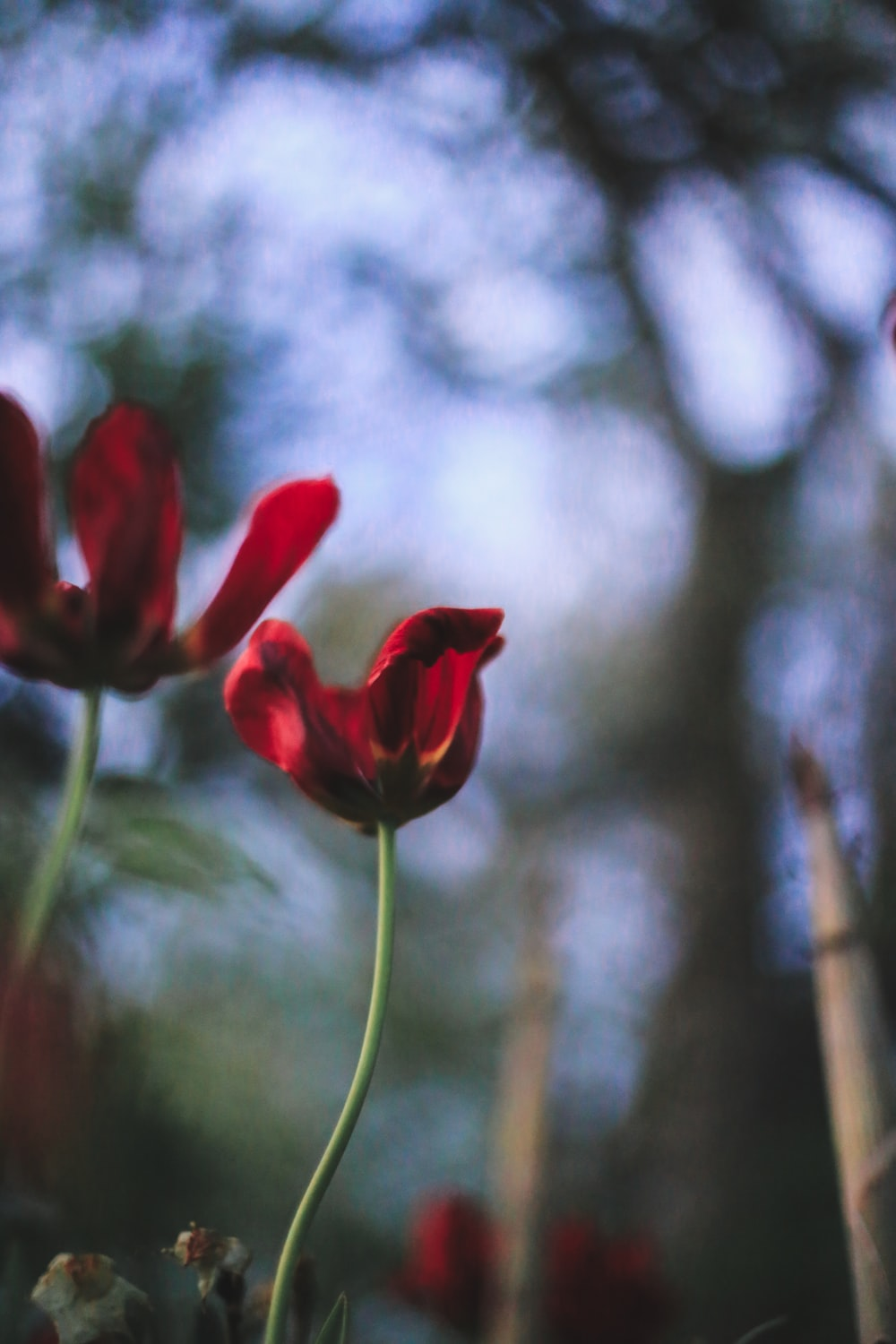 red flower in tilt shift lens