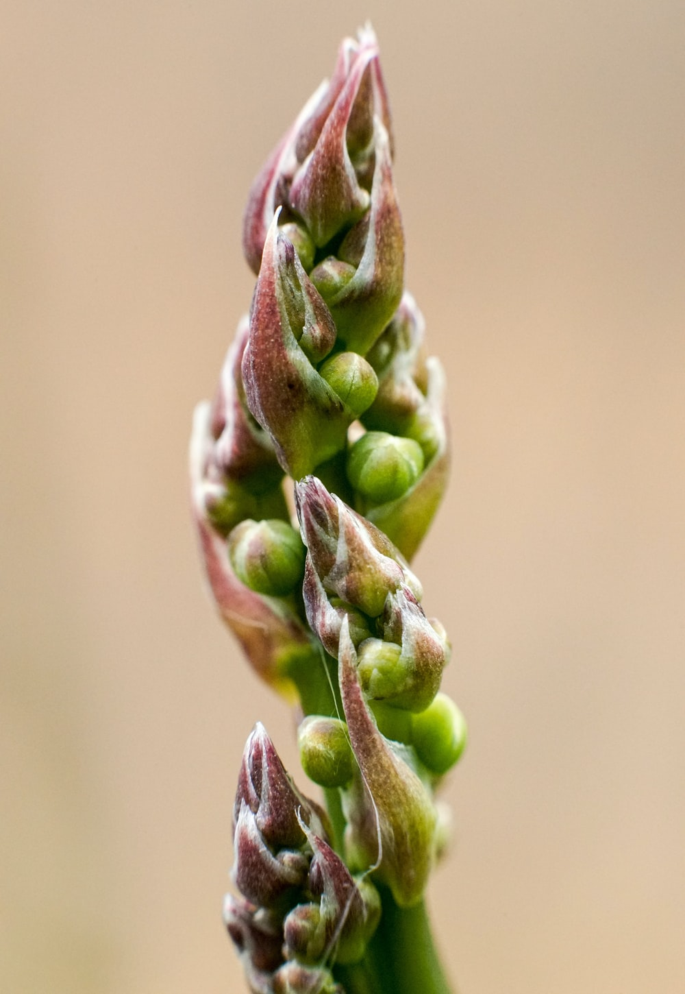green plant stem in close up photography
