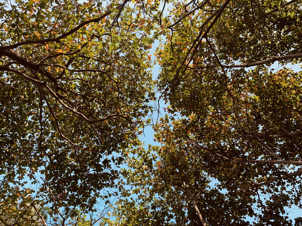 low angle photography of brown leaf tree under blue sky during daytime