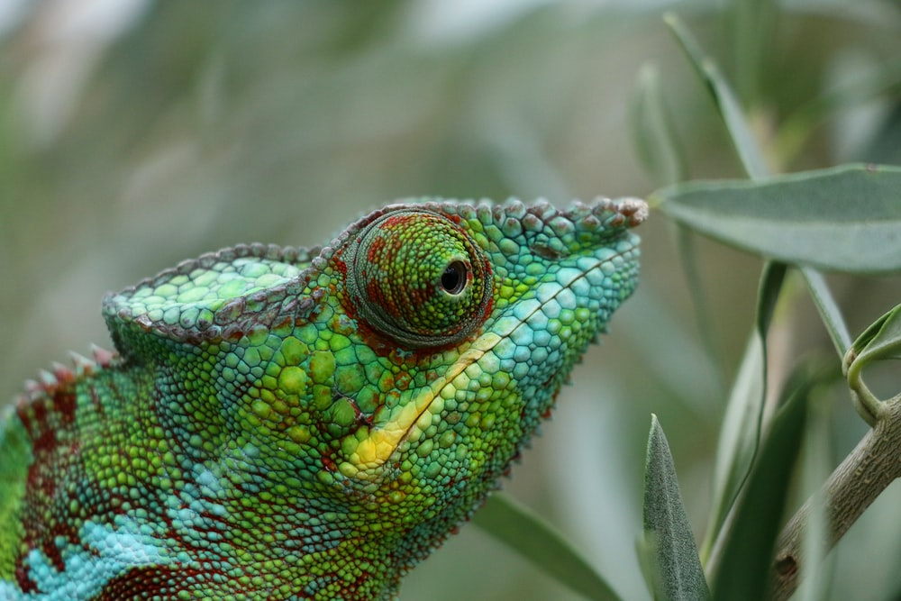 green and brown chameleon on brown tree branch