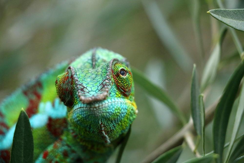 green chameleon on brown tree branch