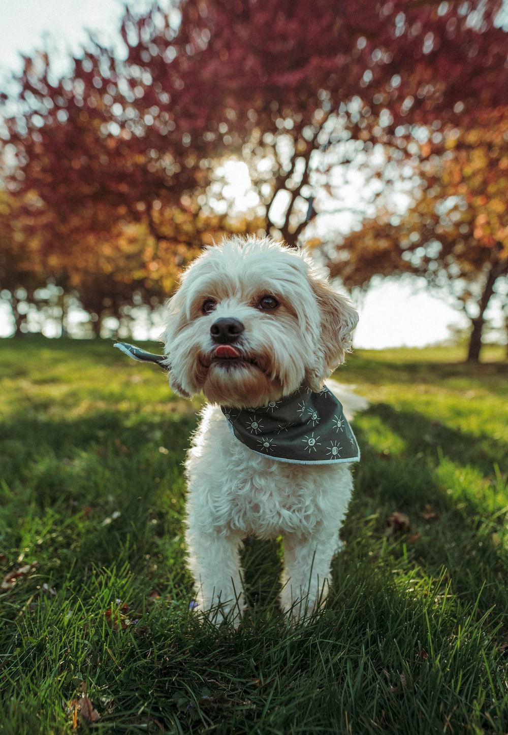 white long coated small dog on green grass field during daytime