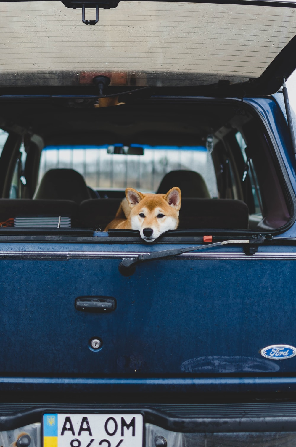 brown and white dog inside blue car
