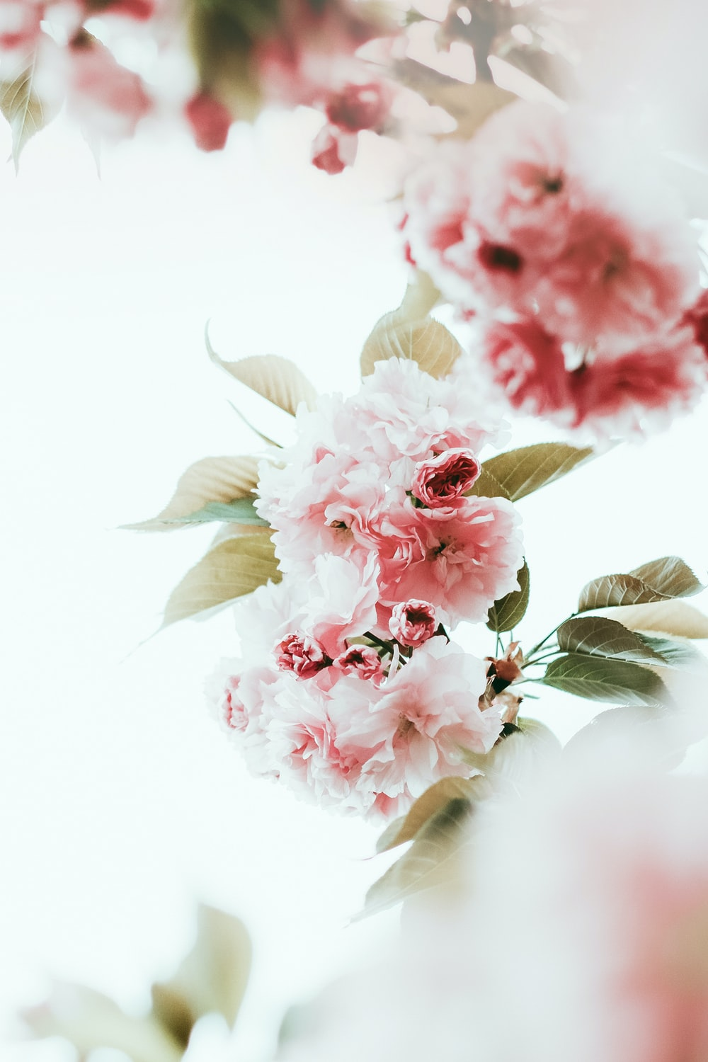 white and pink flower on white surface