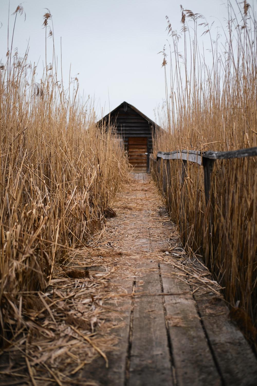 brown wooden dock between brown grass field during daytime