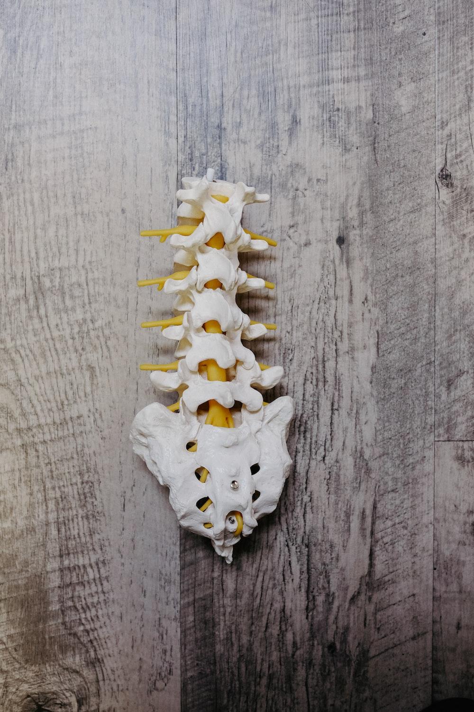 white animal skull on gray wooden surface