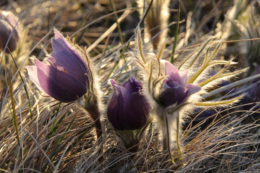 purple flower on brown grass
