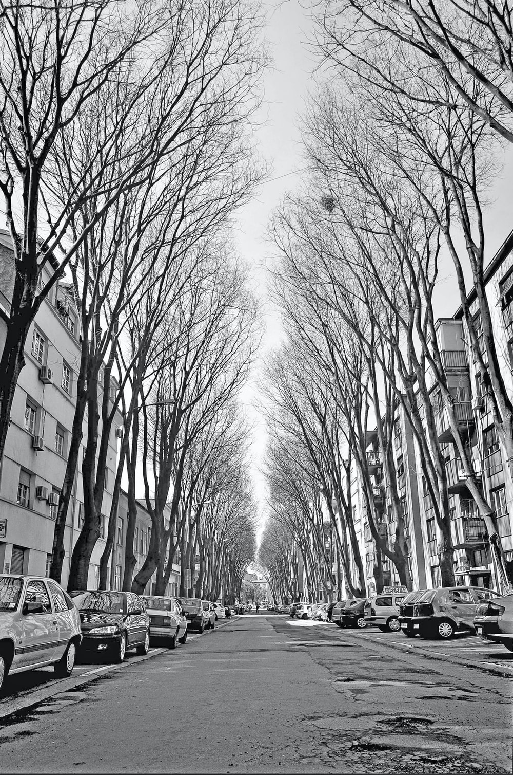 grayscale photo of bare trees near building