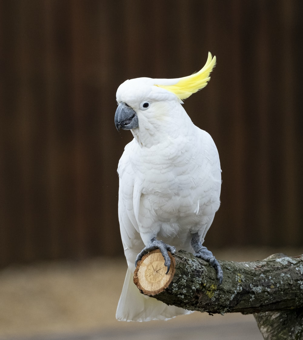 white and yellow bird on brown wooden stick