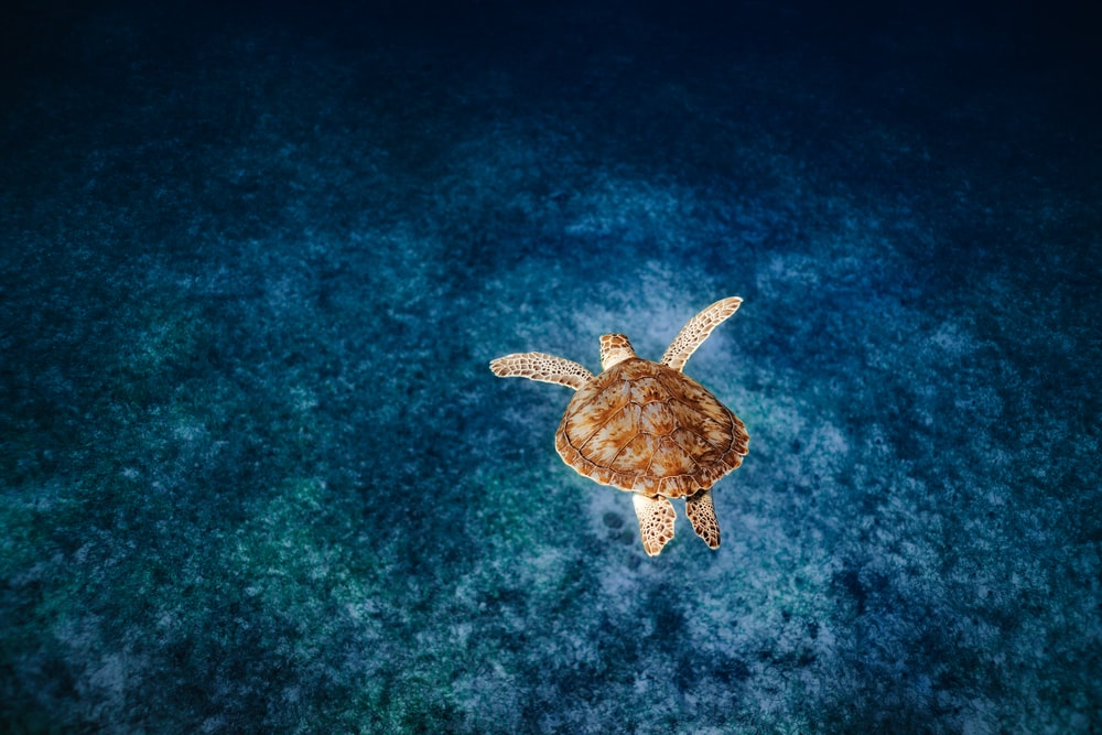 brown and beige turtle on body of water