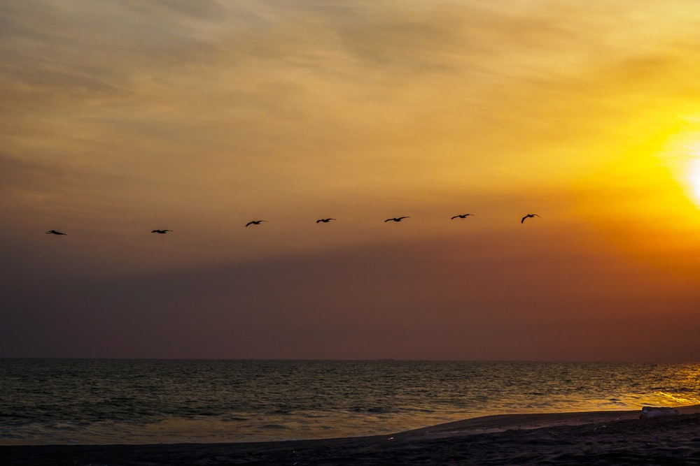 birds flying over the sea during sunset