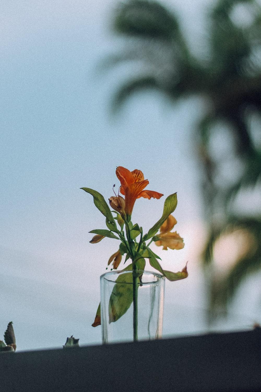 orange flower in clear glass vase