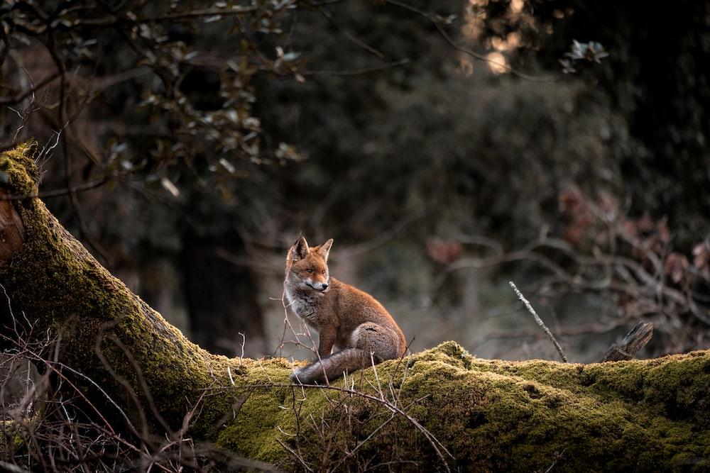 orange cat on brown rock during daytime