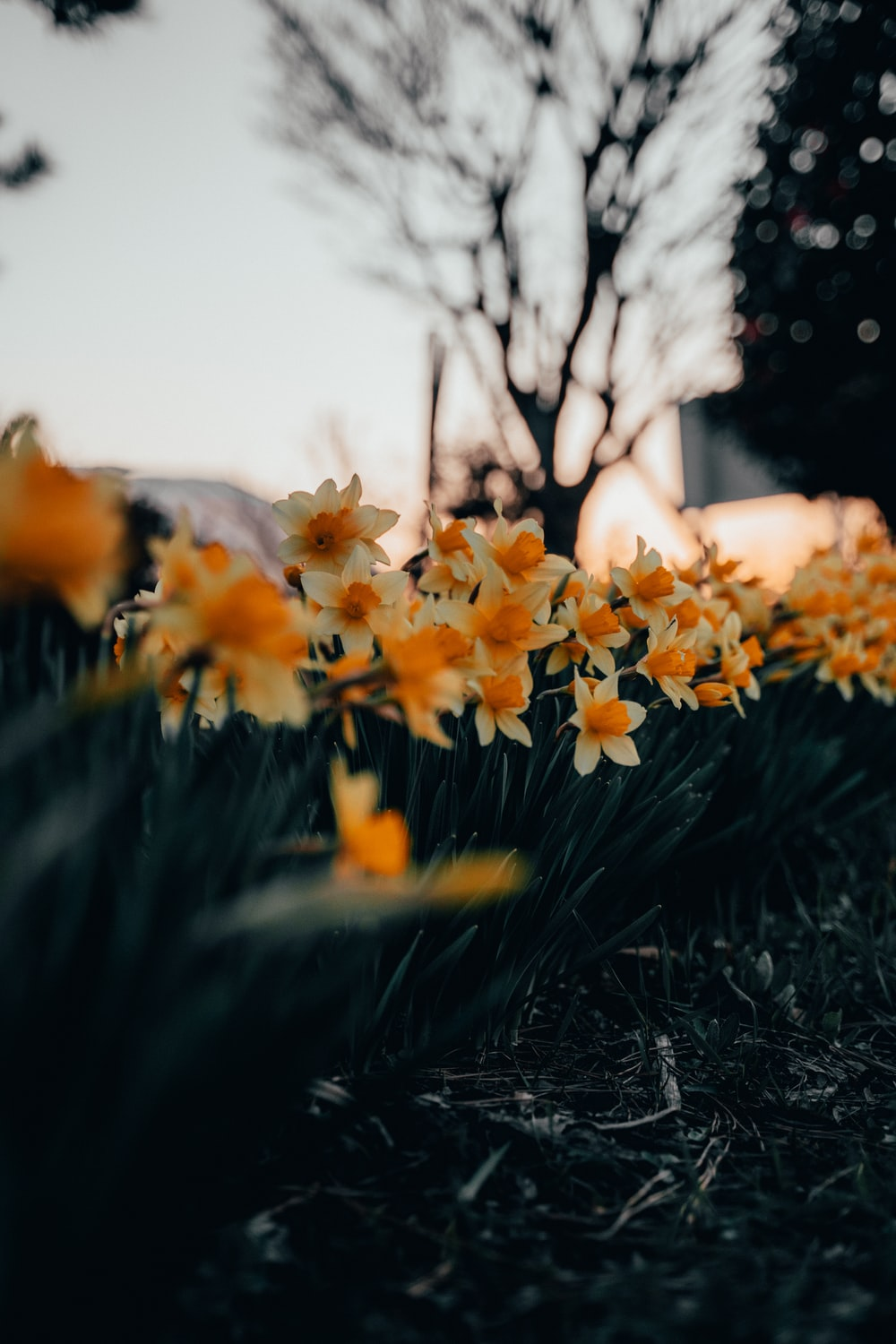 yellow flowers on green grass during daytime