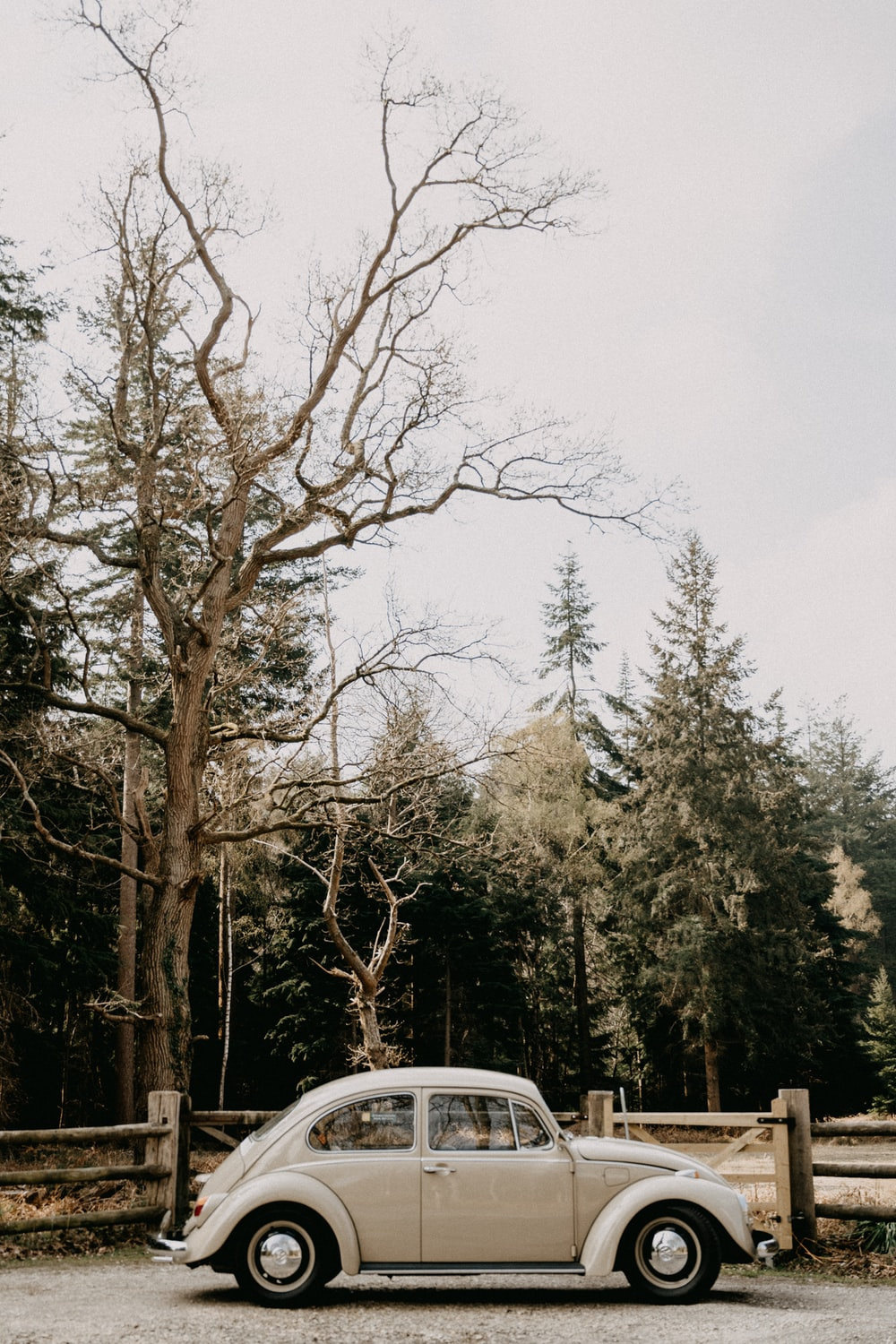 white car parked near trees during daytime