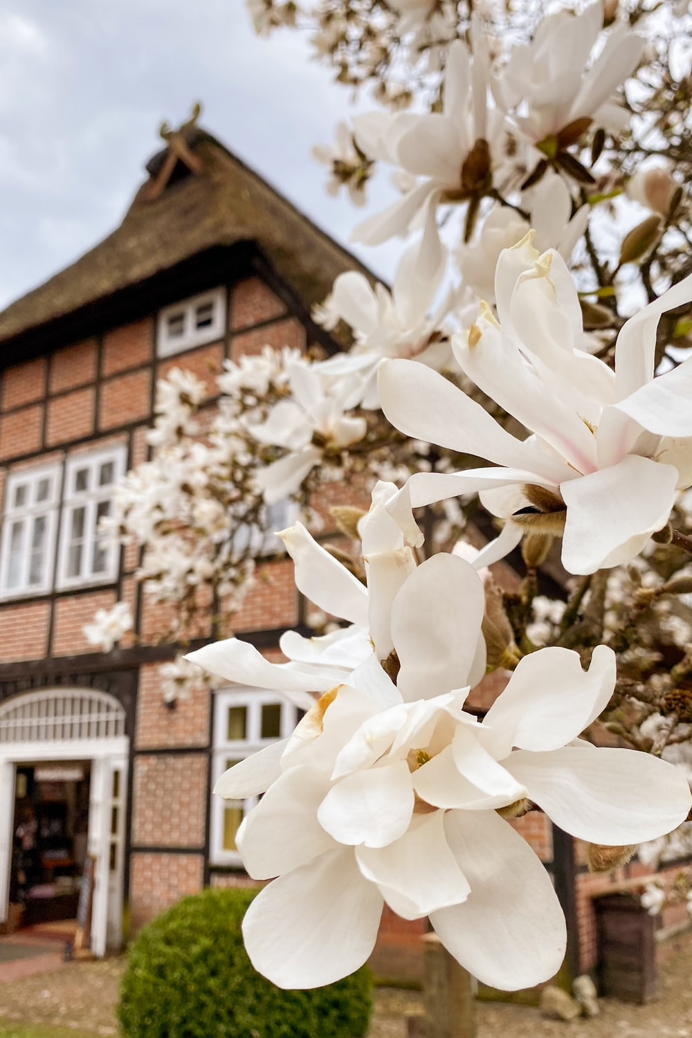 white flowers near brown brick building during daytime