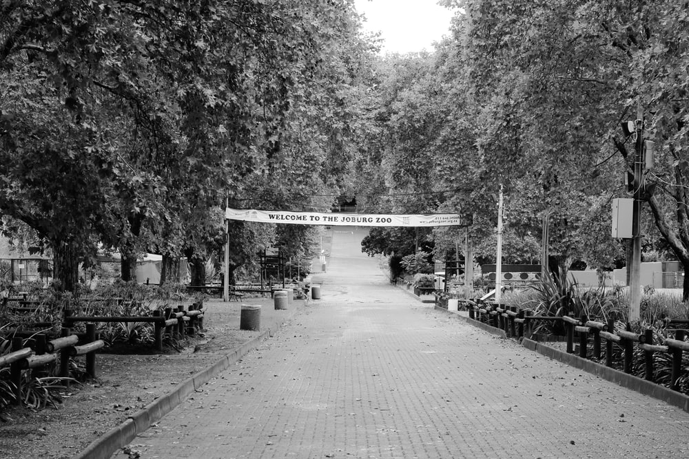 grayscale photo of a park