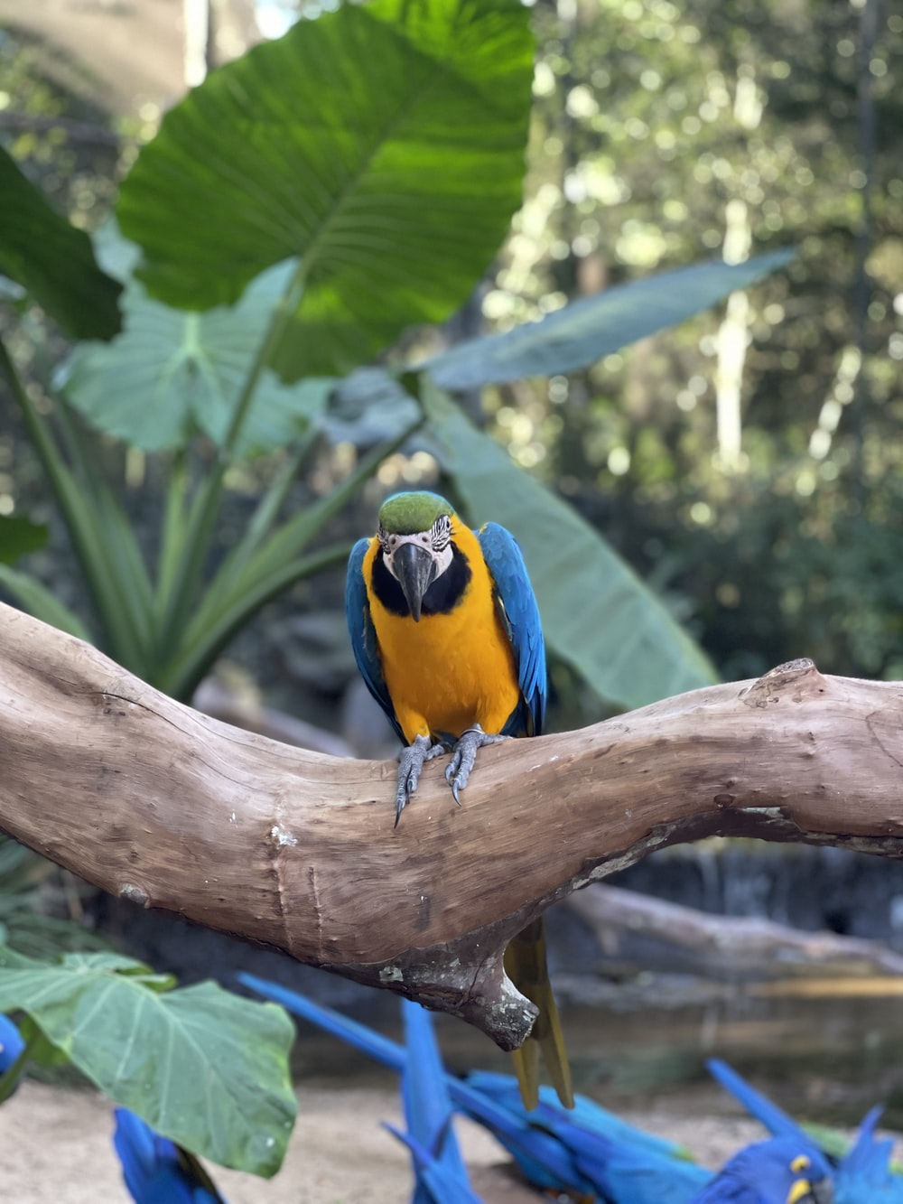 blue yellow and green parrot on brown tree branch during daytime