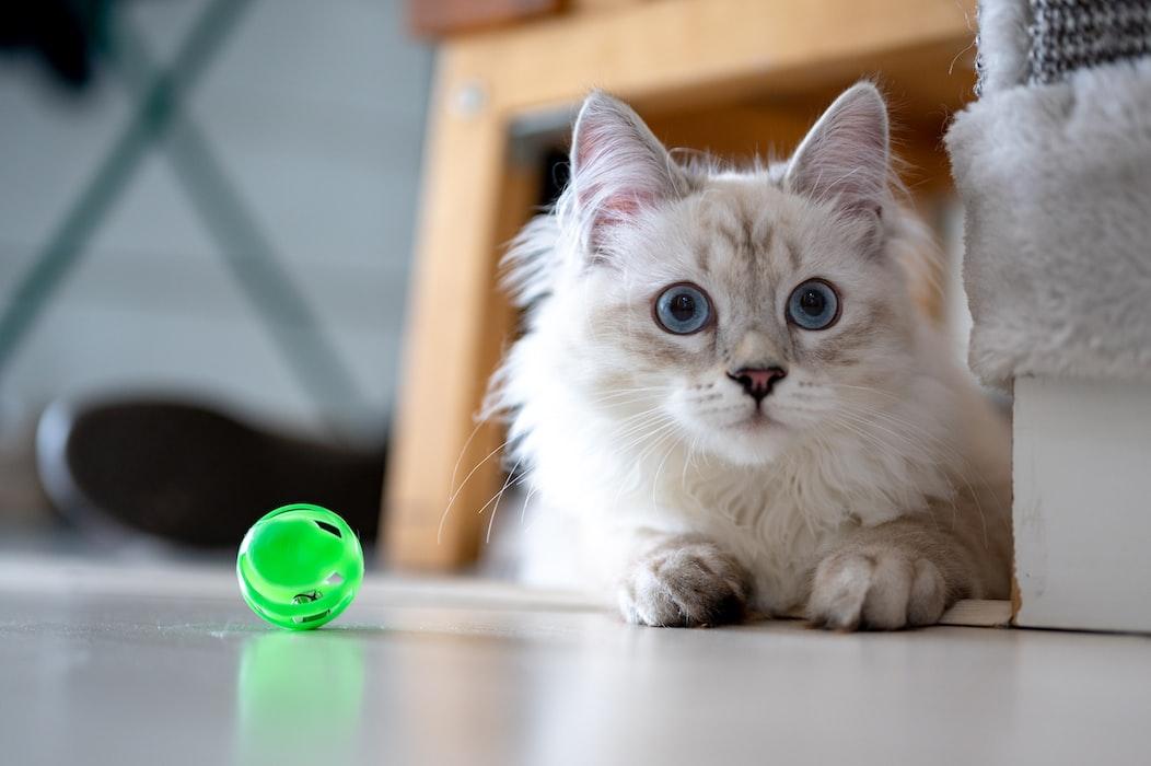 improve your cat behavior through time