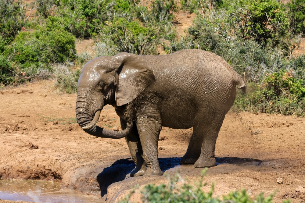 elephant walking on brown dirt during daytime