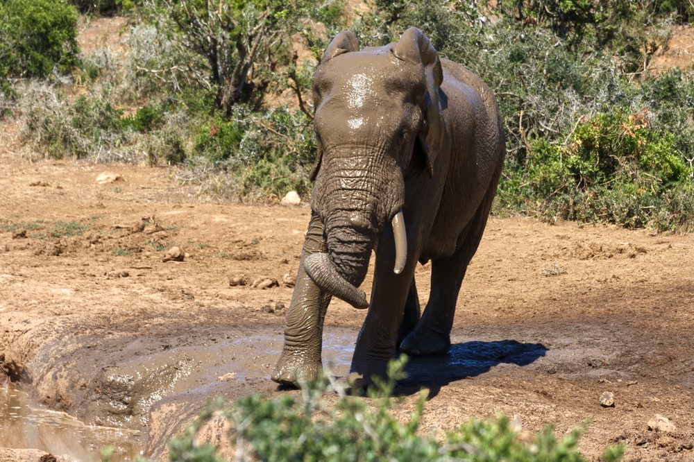 elephant walking on dirt road during daytime