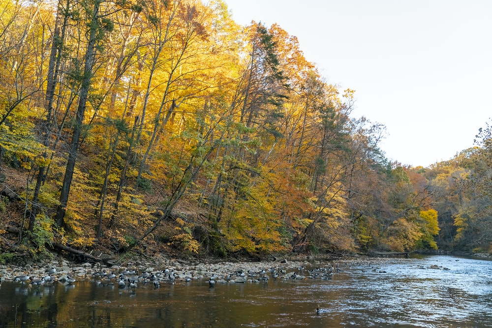 green and yellow trees beside river during daytime