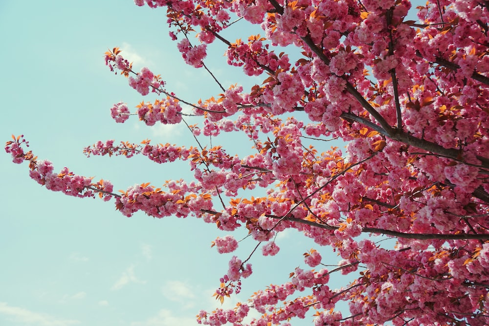 pink and yellow leaves tree under blue sky during daytime