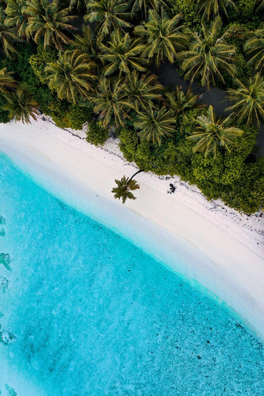 green palm tree beside blue body of water