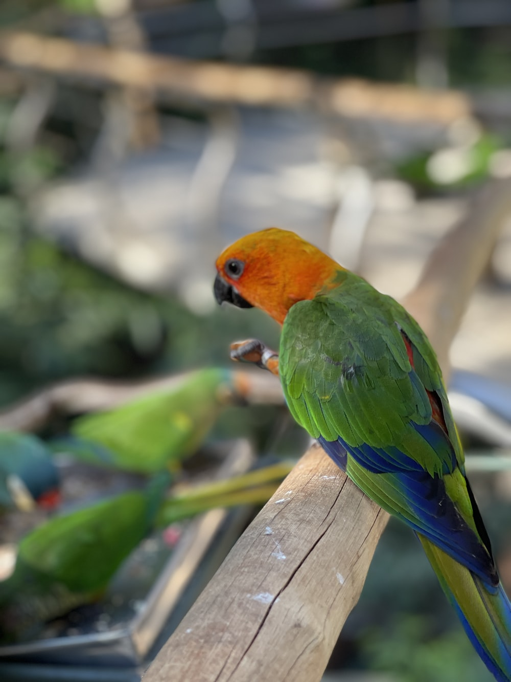 red green and yellow bird on brown wooden fence during daytime