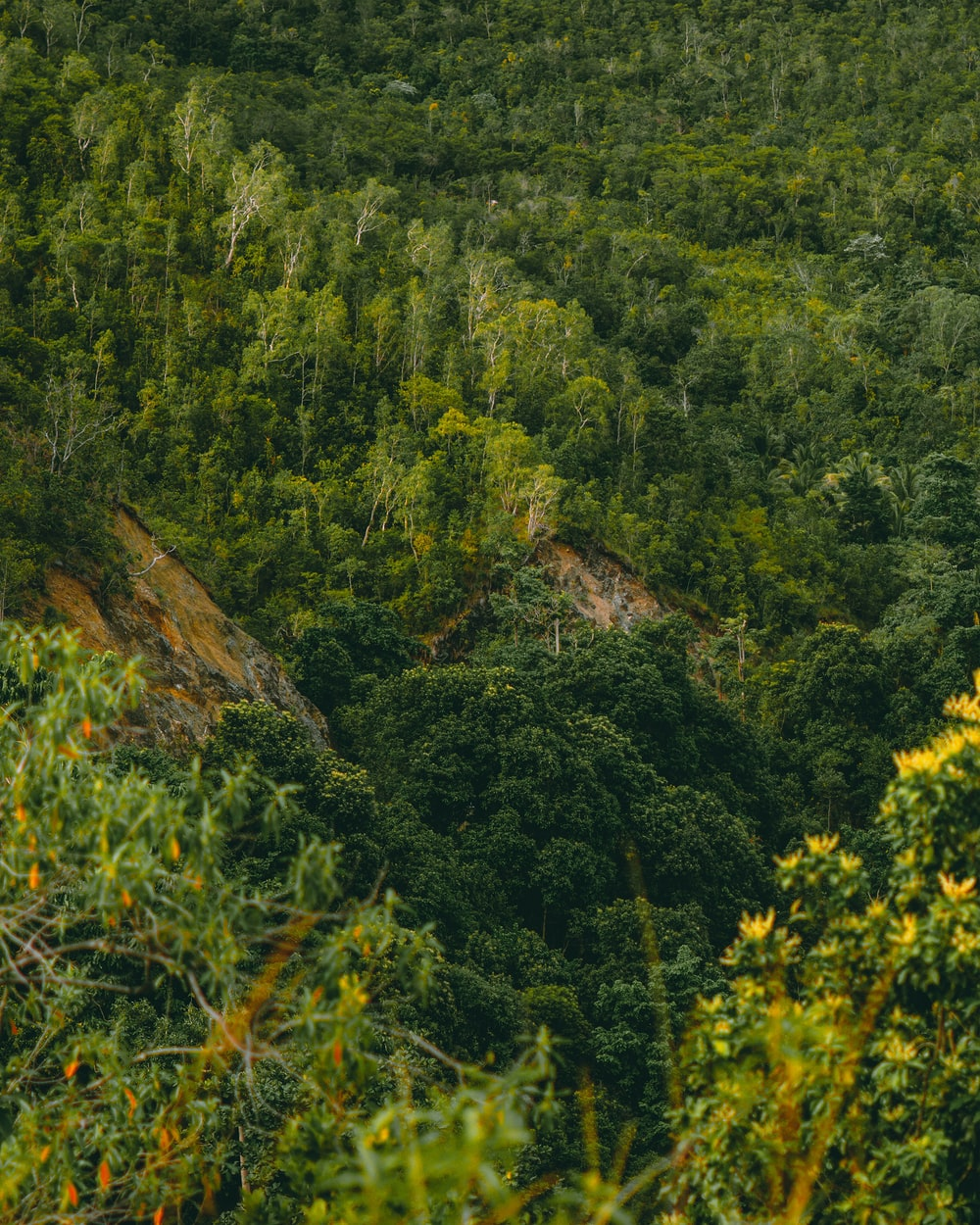 green trees on brown mountain during daytime
