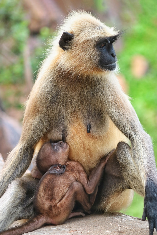 brown monkey sitting on tree branch during daytime