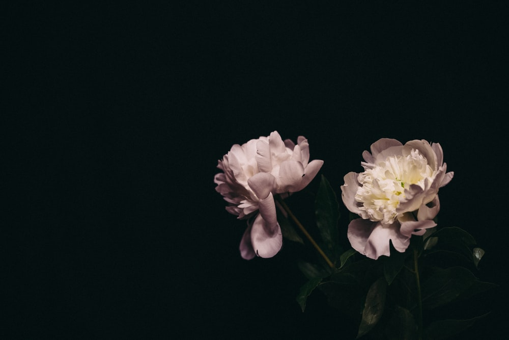 white and yellow flower in black background