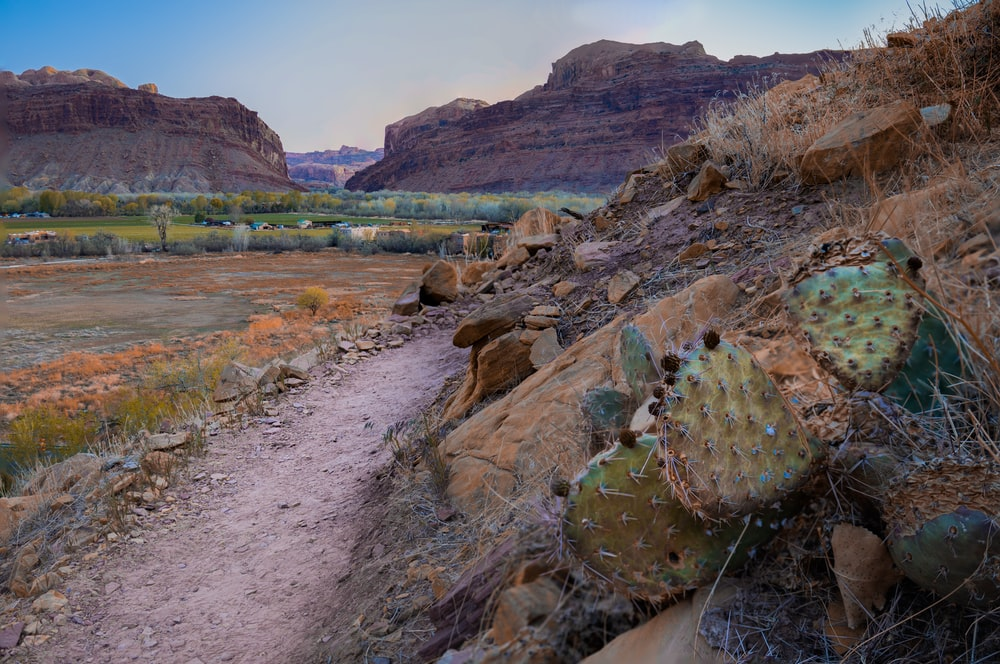 brown and green rock formation near body of water during daytime