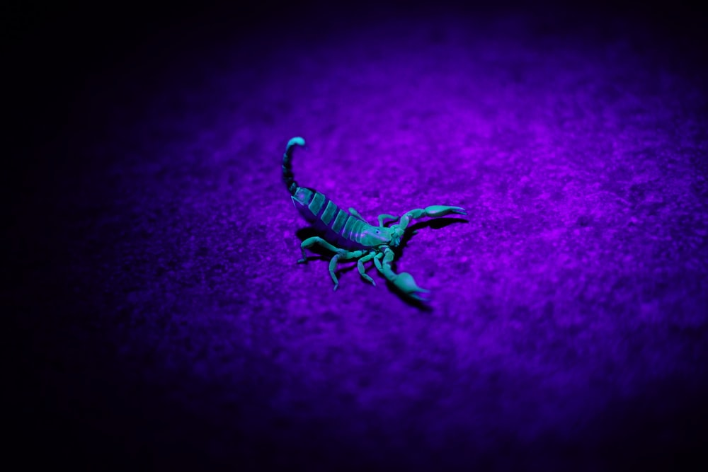 purple and white striped textile