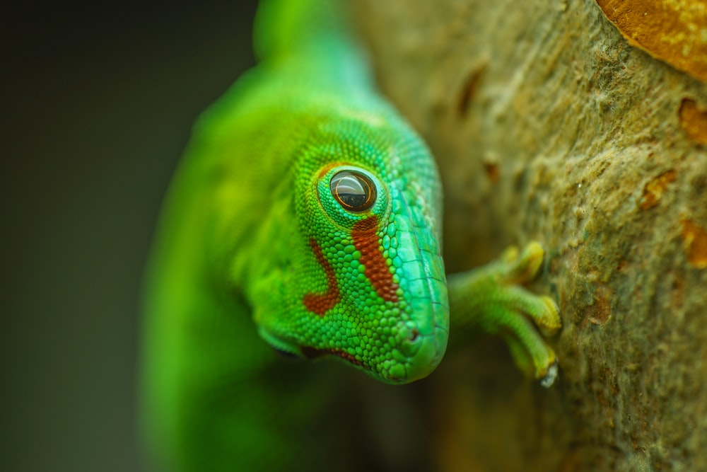 green and blue lizard on brown tree branch
