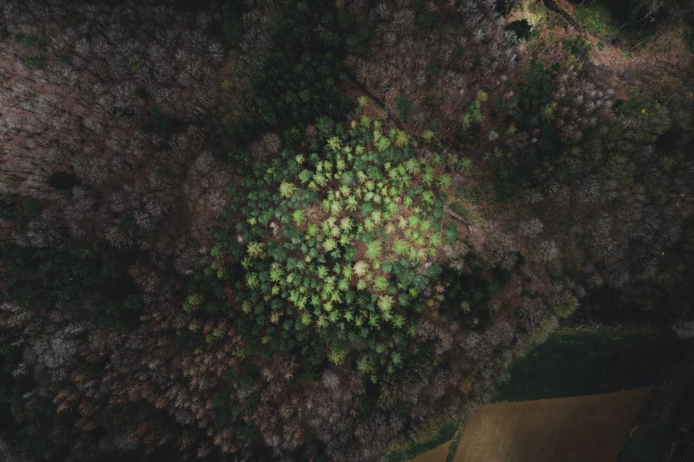 green tree on brown soil